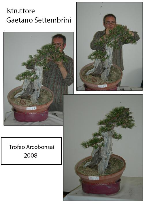 2008 ArcoBonsai Trofeo Istruttori