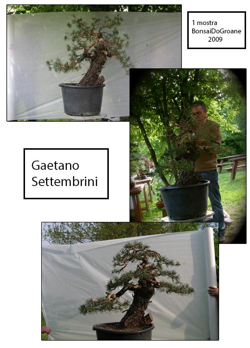 2009 1° Mostra Bonsai Do Groane