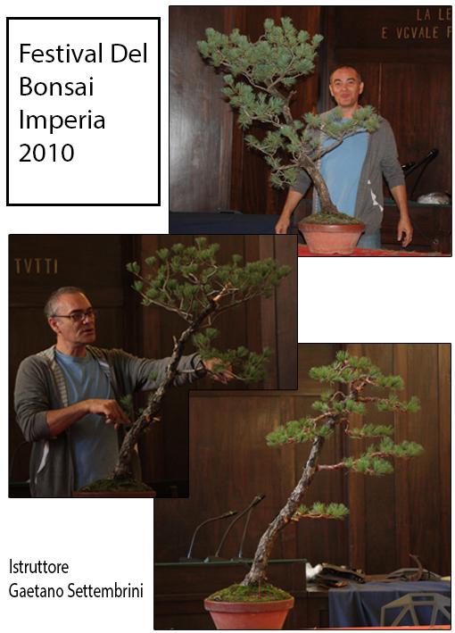 2010 Festival Del Bonsai Imperia