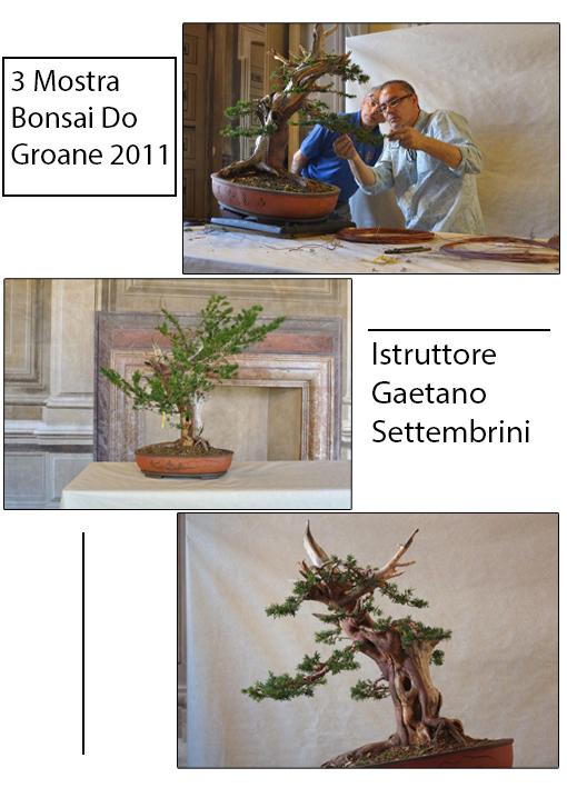2011 3° Mostra Bonsai Do Groane