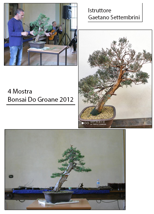 2012 4° Mostra Bonsai Do Groane
