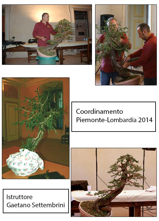2014 Coordinamento Piemonte Lombardia