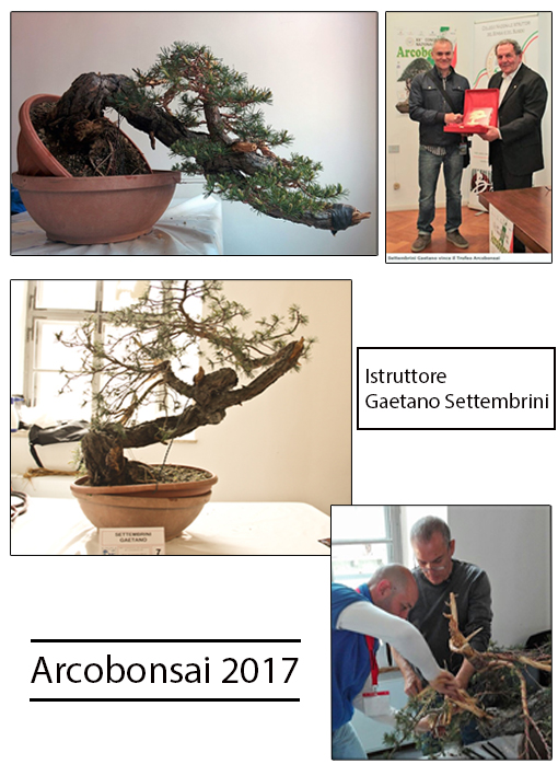 2017 ArcoBonsai Trofeo Istruttori