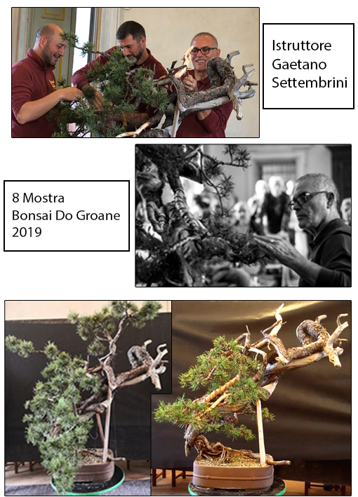 2019 8° Mostra Bonsai Do Groane